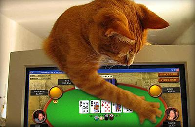 Poker ⭐ Les news et les meilleurs sites de poker en ligne