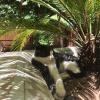 Caddy le chat.JPG