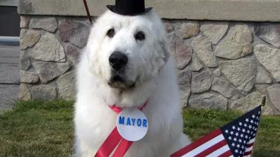 dog-mayors-duke-cormorant-minnesota-960x540.jpg.7a7b843f255863afef0ecc6a5ba1df6a.jpg