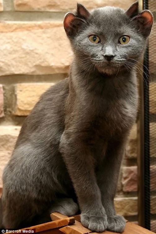 yoda-cat-with-four-ears-4.thumb.jpg.d38ac86a42f10f478ac5950efa00b4ca.jpg