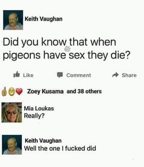 pigeon.jpg.67f33b20b5a8867e2c782e76b2c72a93.jpg