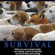 survival66