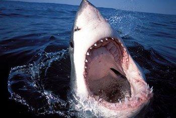Logo les requins malins